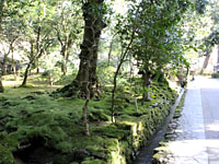 樹齢数百年の杉などが立ち並ぶ参道。
