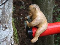 どこかにいるよ「木組の猿」