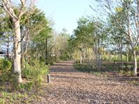 ウッドチップの散策路