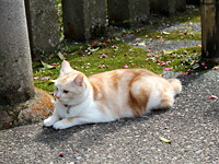 Cat at temple