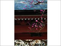 天満宮の象徴ともいえる梅の花が美しい