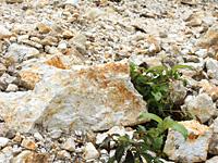 茶色の石がゴロゴロ