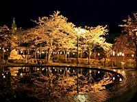 4月は夜桜見物もできる。